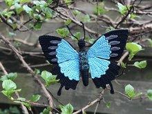 De blauwe tropische vlinder, Papilio ulysses