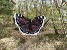 Aurelia Nymphalis Antiopa  rouwmantel vlinder