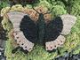 groene tropische vlinder, Papilio palinurus _