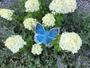 bleekblauwtje_